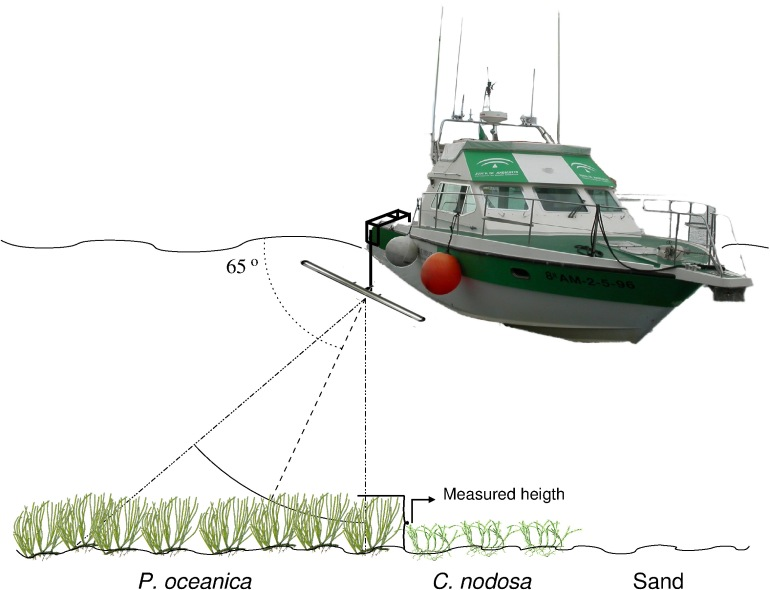 Así funciona el sónar instalado en la embarcación. Ilustración: N. Sánchez Carnero.