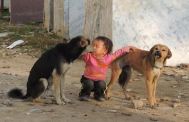 Los-veterinarios-decisivos-en-Nepal_image_380