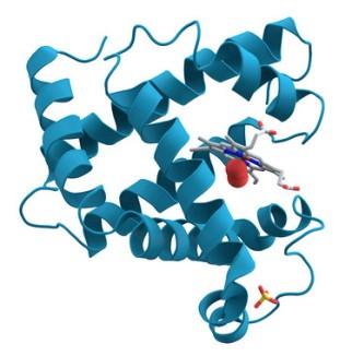 Cientificos-espanoles-en-busca-de-las-proteinas-perdidas_image_380